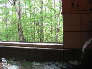 貸切ラジウム鉱石天然温泉 ペンション ステイ