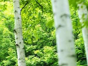 ◆周辺観光/定山渓には緑がいっぱい!運が良いとエゾシカやエゾリスに会えるかも(イメージ写真)