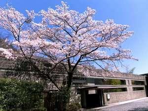 【外観】春になると、玄関前の桜がきれいです。しだれ桜も敷地内にあり、春の訪れを告げてくれます