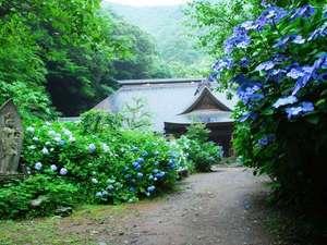 【周辺観光】阿弥陀寺はあじさいの隠れた名所