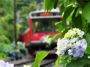 【あじさい】6月中旬より各地であじさいが咲き誇る初夏の箱根
