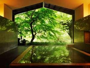【大浴場】開放感ある半露天風呂。須雲川を包む輝く木立が写り、せせらぎが聞こえる(写真は夏頃)※