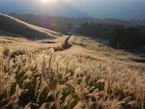 星野リゾート 界 箱根:【仙石原のすすき草原】9月中旬~11月まで愉しめる、関東エリア屈指のすすきの名所。ぜひ散策を