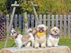 ワンちゃんと泊まる宿 ラハイナ:ペットは大事な家族の一員!旅行ももちろん一緒に♪♪