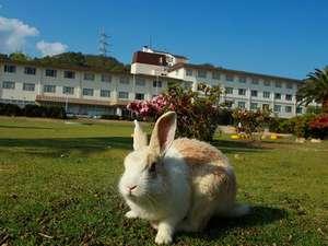 休暇村大久野島の写真