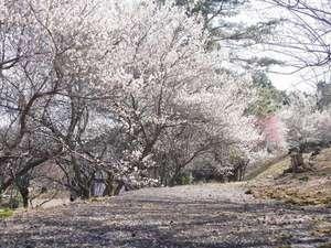 栃木 那須 馬頭温泉郷 南平台温泉ホテル:梅が咲き乱れます