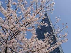 桜に包まれた春の風景。琵琶湖畔ならではの美しい景色が、ここにはあります。
