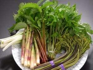 奥羽山脈の中腹に位置する当館の近隣は山菜やきのこの宝庫!!地元で採れ立ての旬の食材を食膳に。