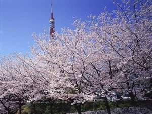 ホテル前から見た桜と東京タワー※桜の季節のみ