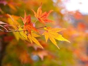 【紅葉】例年11月~12月上旬が見頃です。