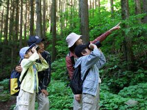 御池野鳥の森公園 御池キャンプ村:野鳥のさえずりを聴きながら森林浴をお愉しみください。(イメージ)