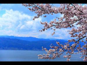 貸別荘 ネイチャービレッジ諏訪塩嶺:諏訪湖と桜
