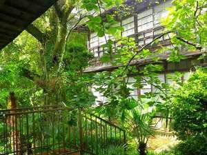 七沢温泉 中屋旅館:*お庭にはたくさんの自然があふれています。