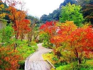 北郷 音色香の季 合歓のはな:11月紅葉が見られる始める「合歓のはな」