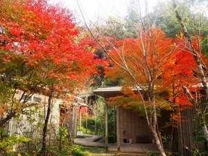 北郷 音色香の季 合歓のはな:日本人の美意識にある四季の移ろい。秋の紅葉こそ、「もののあわれ」や「趣きのある情景」の原点
