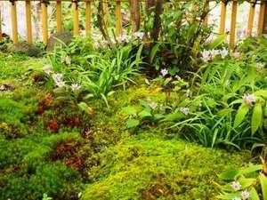 北郷 音色香の季 合歓のはな:苔庭