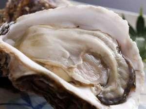 料理旅館 鳥喜:【夏限定】「海のミルク」と称される天橋立名物の大粒な岩牡蠣
