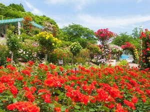 花巻温泉ホテル千秋閣(せんしゅうかく):花巻温泉バラ園では6,000株を越えるバラが鮮やかに咲き誇ります。