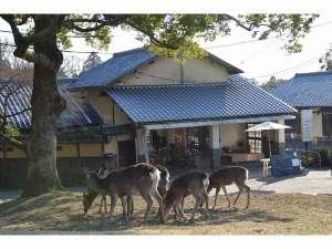 The Deer Park Innの写真
