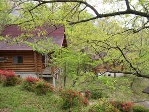 九州中央山地国定公園 市房山キャンプ場:森の中にたたずむログハウス群。