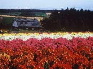 ペンション 麦 (ばく):四季彩の丘の花畑からのペンション麦