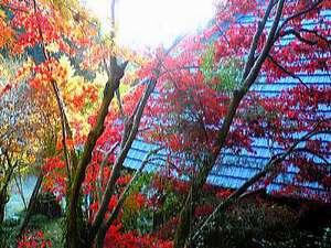 千倉町の山間にある名古刹「小松寺」 11月後半から12月上旬にかけて、関東で最も遅い紅葉が楽しめます