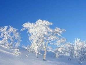 ハチ北スキー場頂上付近の樹氷