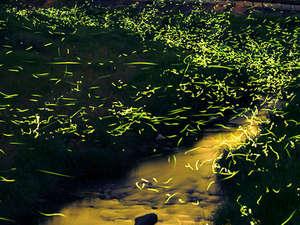 【6月20日まで限定】ホタルの絶景スポットへご案内します♪