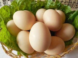 大きさは普通の鶏卵よりひと回り小さいですが、割ってみると新鮮さは一目瞭然!