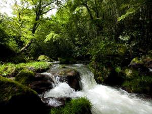 別館すぐ側を流れる白滝川。川のせせらぎも素敵なBGM