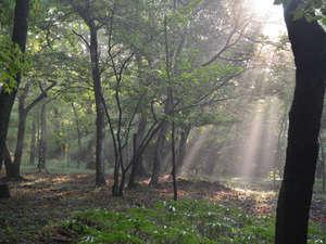 旅行人山荘:森林セラピーロードの自然林が散歩道
