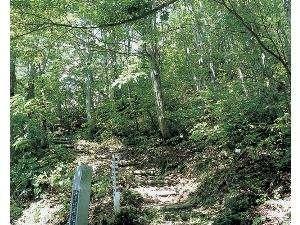 山刀伐峠 松尾芭蕉が苦労して越えた山刀伐峠。今は『歴史の道』として整備され散策ができます。(最上町)