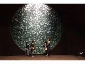 華夕美日本海:クラゲドリーム館