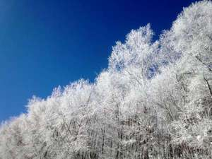 かなやま湖ログホテルラーチ:厳寒に自然の芸術 霧氷