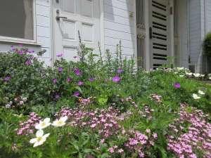 ペンション ホワイト クローバー:たくさんの宿根草が咲いています。