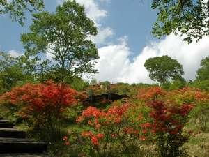 森のやさしさに包まれる小さな宿 銀の森:5月末 美し森はレンゲツツジで真っ赤に染まります
