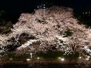 【春】ラウンジから望む夜桜