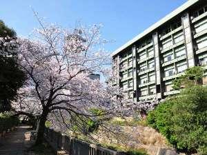 春の松川遊歩道