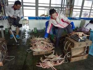 香住 カニ料理が自慢の漁師宿 双葉荘:カニの選別