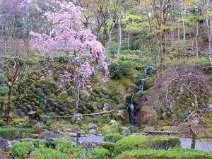 春には宙のしだれ桜が皆様をお迎え致します。(見頃は4月上旬)イメージ