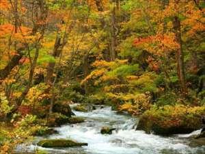 十和田湖レークビューホテル:奥入瀬渓流の紅葉