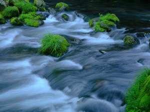 蓼科温泉ホテル親湯 山と渓流に抱かれた露天風呂の宿:<滝の湯川>親湯の目の前を流れる渓流。川の音に癒される