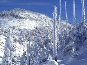 蓼科温泉ホテル親湯 山と渓流に抱かれた露天風呂の宿:雪が多く、気温が低いと樹氷を見ることが出来る