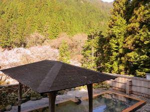 くらま温泉:露天風呂より桜を望む
