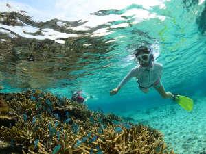 【カヤックで行くシュノーケルツアー】目の前に迫る鮮やかな珊瑚礁と熱帯魚の世界は感動的です。