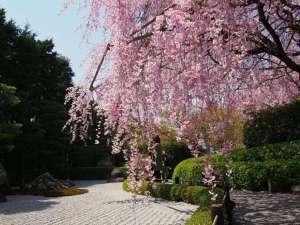 京都五条 瞑想の湯 ホテル秀峰閣:桜