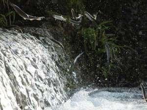 匹見峡温泉やすらぎの湯