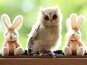 フクロウのいる宿 オーベルジュ渓翠館:小さなお子様でも触れ合える小型ふくろうの桃です。詳細は当館公式HP(keisuikan.com)で確認