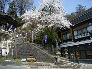 旅館 内田屋:4月中旬から下旬にかけてお隣円蔵寺の華やかな桜がお楽しみいただけます♪