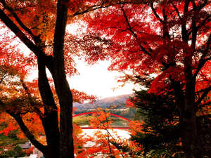 旅館 内田屋:内田屋のすぐ上にある福満虚空蔵尊の紅葉は柳津を代表する紅葉スポット